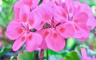 """¿Optimismo? Yo paso del """"Happy flower"""" y las frases motivadoras"""